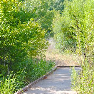 Trinity River Audubon Center & Trails