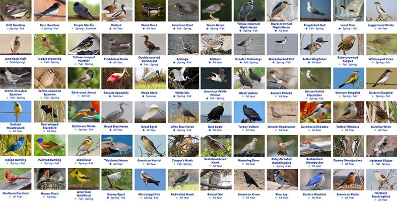 2019 Bird Guide